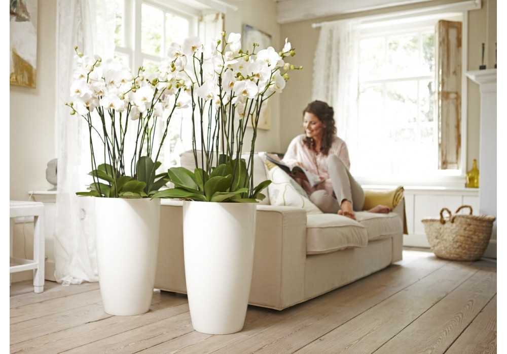 Цветы в квартире и спальне по фен-шую