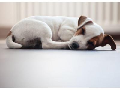 Есть ли польза от сна на полу?